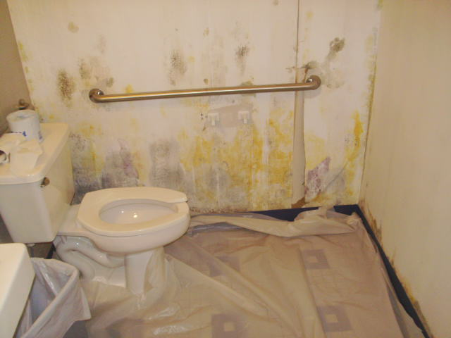 Toxic Black Mold Removal In Orlando Before And After